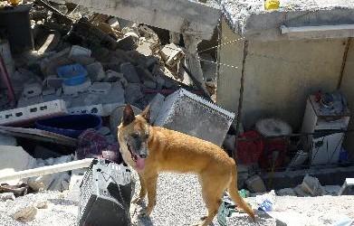 Inzet na de aardbeving in Haiti 2010
