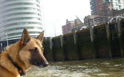 Vermissing Rotterdam (28 januari 2013- 19 juni 2013)