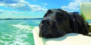 boatus-dog