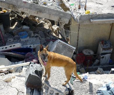 Inzet na de aardbeving in Haïti (12 januari 2010)