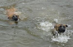 pupzwemmen