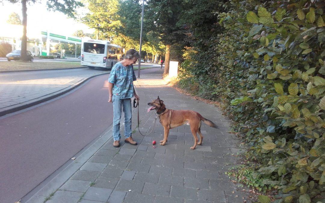 Vermiste vrouw Den Bosch (17 augustus-7 september 2016)!