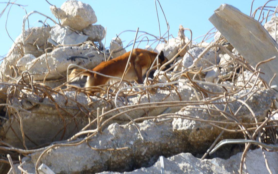 Zoeken na een aardbeving