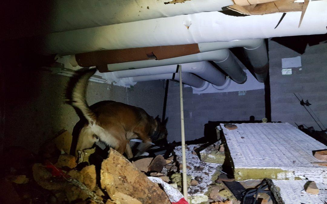 Impressie Signi zoekhonden voor het opsporen van vermiste mensen in rampgebieden.