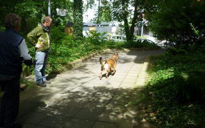 Zoekactie Limburg