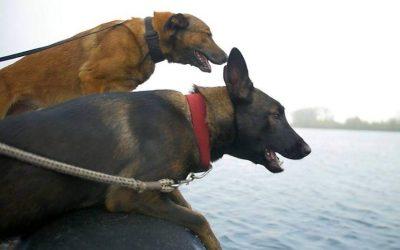 Puppy's Power!